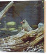 Female Cardinal  Wood Print