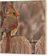 Female Cardinal On The Fence Wood Print
