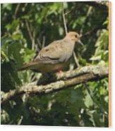 Female Dove Resting On Limb Wood Print