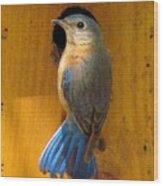 Female Eastern Bluebird 7 Wood Print