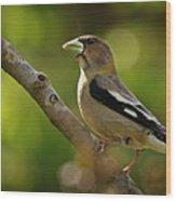 Female Evening Grosbeak - 365-55 Wood Print