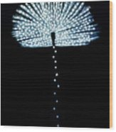 Female Feather Wood Print