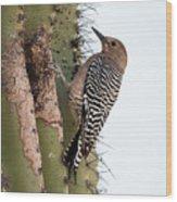 Female Gila Woodpecker-img__2691-2016 Wood Print