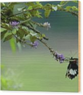 Female Great Mormon Butterfly On A Branch Wood Print