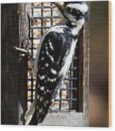 Female Hairy Woodpecker Wood Print