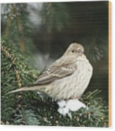 Female House Finch On Snow Wood Print