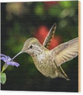 Female Hummingbird And A Small Blue Flower Left Angled View Wood Print
