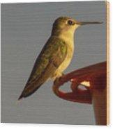 Female Hummingbird Wood Print