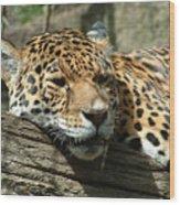 Female Jaguar Wood Print