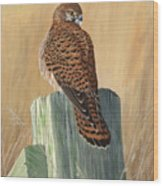 Female Kestrel Study Wood Print
