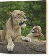 Momma Lion Over Cubs Attitude Wood Print
