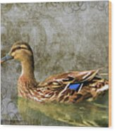 Female Mallard Wood Print