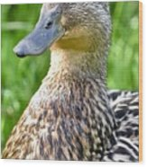 Female Mallard Duck Close Up Wood Print