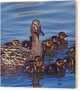 Female Mallard Duck With Chicks Wood Print