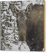 Female Moose In A Winter Wonderland Wood Print