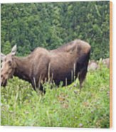 Female Moose Wood Print