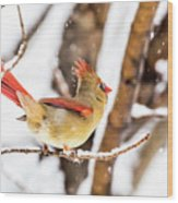 Female Northern Cardinal In The Snow Wood Print