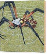 Female Orb Spider -1 Wood Print