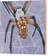 Female Orb Spider Wood Print