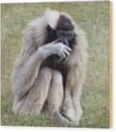 Female Pileated Gibbon, Gladys Porter Zoo Wood Print