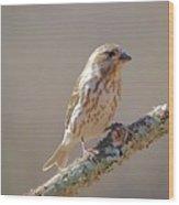 Female Purple Finch Wood Print