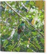 Female Quetzal Wood Print