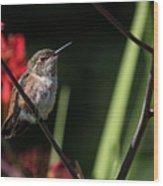 Female Rufous Hummingbird Wood Print