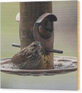 Female Sparrow On Birdfeeder Wood Print