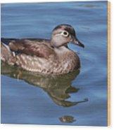Female Wood Duck Wood Print