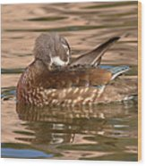 Female Wood Duck Preening On The Water Wood Print