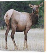 Feme Elk Wood Print