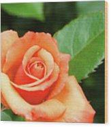 Feminine Rose Wood Print
