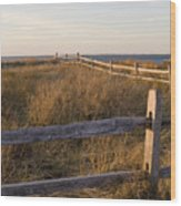 Fence Along The Dunes - Madaket - Nantucket Wood Print