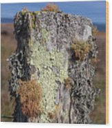 Fence Post Encrusted With Lichen  Wood Print