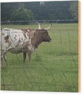 Fence Protection Vrs Fl Longhorn Wood Print