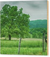 Fence Row And Tree Wood Print