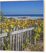 Fences On The Dunes Wood Print