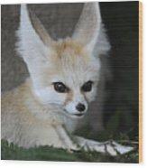 Fennec Fox Wood Print