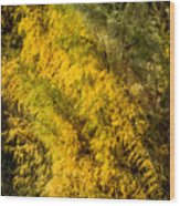 Fens In Fall Color Wood Print