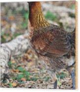 Feral Bird Wood Print