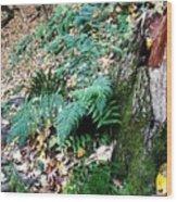 Fern And Moss I Wood Print