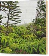 Fern And Norfolk II Wood Print