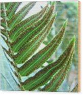 Fern Art Print Green Forest Ferns Baslee Troutman Wood Print