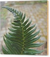 Fern Art Prints Green Garden Fern Branch Botanical Baslee Troutman Wood Print
