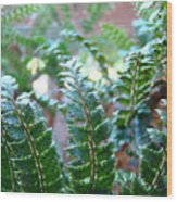 Fern Art Prints Green Sunlit Forest Ferns Giclee Baslee Troutman Wood Print