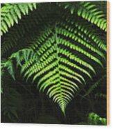 Fern Canyon California 1 Wood Print