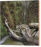 Fern Canyon Creek Wood Print