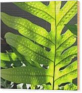 Fern Delight Wood Print