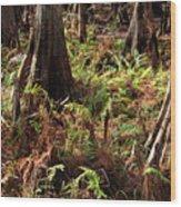 Fern Forest Floor Wood Print