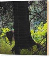 Fern Forest Wood Print